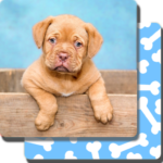 Puppy Games Kids – Cool Puppies for Cool Kids 5.20.020 APK MOD
