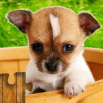 Dogs Jigsaw Puzzles Game – For Kids & Adults 🐶 APK MOD 28.0
