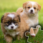 Dogs & Cats Puzzles for kids & toddlers 2 🐱🐩 APK MOD 2021.44